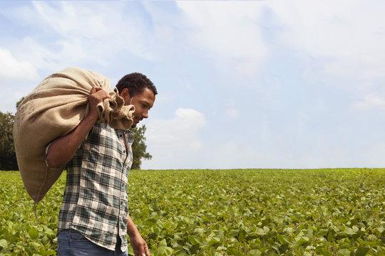Brazilian coffee farmer at coffee plantation with copy space