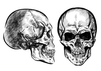 hand drawn anatomy skull with different tones and lines. Vector