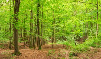 Laubbäume Wald Natur
