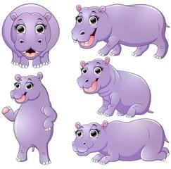 Hippo cartoon set collection