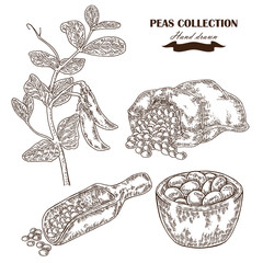 Hand drawn peas plant. Wooden scoop, sack and plate with pea.