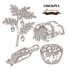 Hand drawn chickpea plant. Wooden scoop, sack and plate with pea