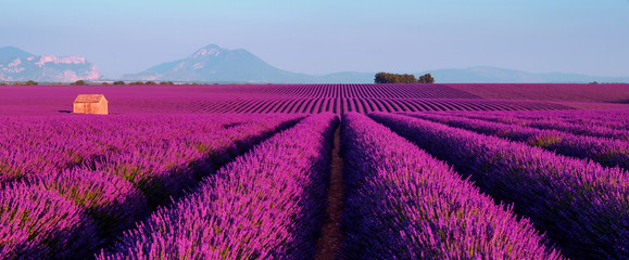 Tuinposter Platteland Lavender field at sunset in Provence, France