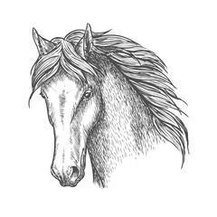 Purebred horse head sketch for equine sport design