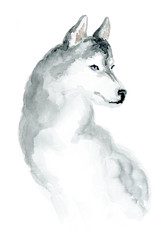 The Siberian husky. Image of a thoroughbred dog. Watercolor painting.