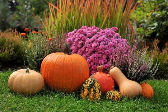 Punpkins in garden