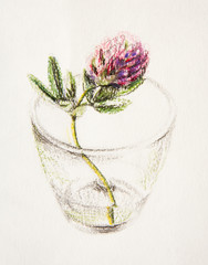 Drawing oil pastel. clover flower in a glass of water.