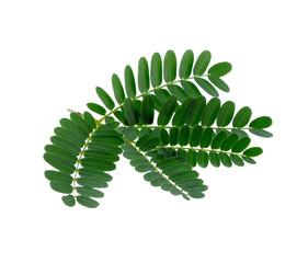 Tamarind leaves on white background