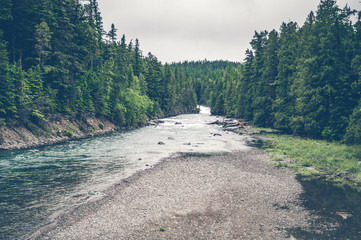 River stream surrounded by pine trees