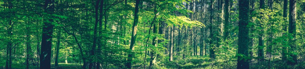 Tall trees in a green forest