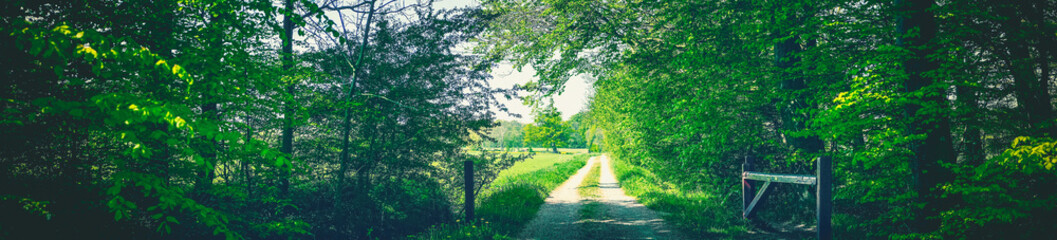 Countryside road in a green forest