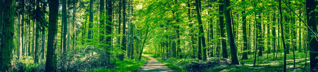 Foto op Canvas Bos Green trees by a forest path