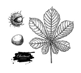 Vector chestnut leaf and nuts drawing set. Autumn elements.