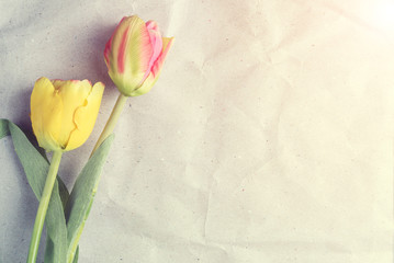 Tulips on old paper, vintage texture background.