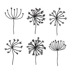 Dandelion Fluffy Seeds Flowers hand drawn