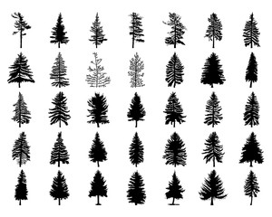 Vector set silhouette of different Canadian pine trees. Conifer tree silhouettes on the white background Collection. Bundle of trees.