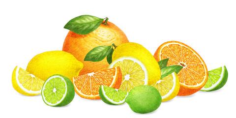 Hand-drawn illustration of fruits. Digitally colored. Orange, lemon and lime.