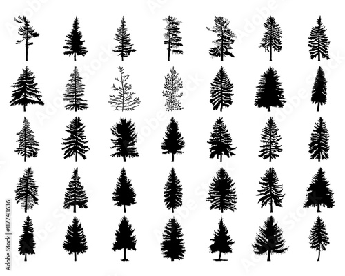 Vector Set Silhouette Of Different Canadian Pine Trees Conifer Tree