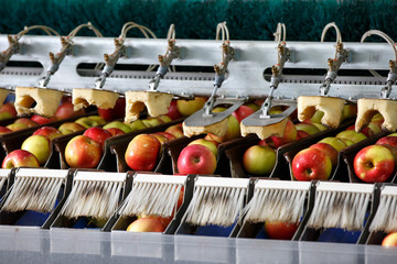 Clean and fresh apples on conveyor belt