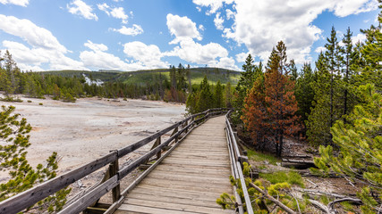 Wooden walkway among the geysers and trees. Back Basin of Norris Geyser Basin. Yellowstone National Park, Wyoming