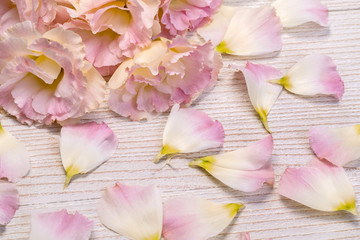 flowers on light wooden background.