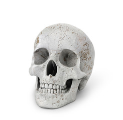 Human skull on isolated white background. 3d illustration
