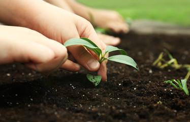 Kids planting seedlings in soil