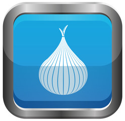 White onion vector image