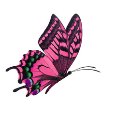 pink butterfy flying
