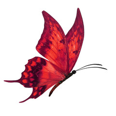 red butterfy flying