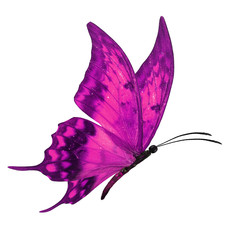 pink butterfly flying