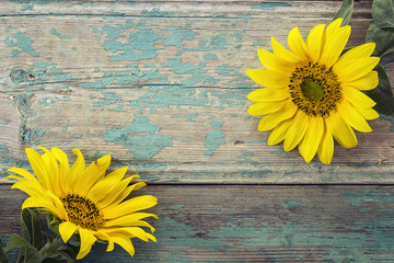 Background with sunflowers on old wooden boards with peeling pai