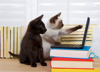 Siamese kitten sitting pointing at screen with one paw, other paw on keyboard of miniature laptop type computer stacked on books. Black kitten with green eyes watching intently. Books in background.