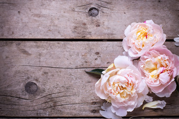 Tender pink peonies flowers on aged wooden background. Flat lay.