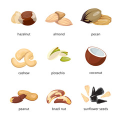 Cartoon nuts vector set
