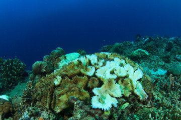 Coral bleaching. Dead coral because climate change, global warming, rising sea temperatures, pollution.