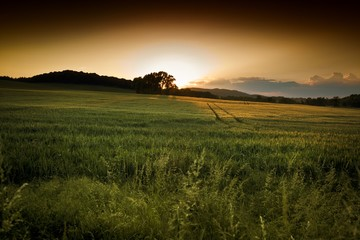 Beautiful summer sunset over the fields and forest