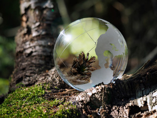 The ball in the woods on a stump with moss. Glass - a material, concepts and themes, environment, nature. Beautiful reflection of the cones, fairy tale forest