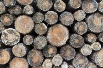 lagerndes Holz im Wald