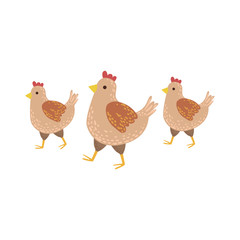 Three Brown Chickens Wakling