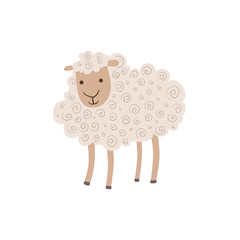 White Curly Sheep Standing