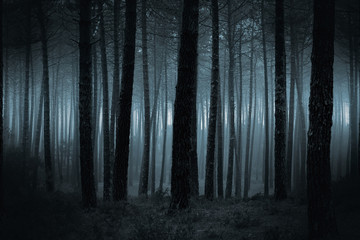 Foto op Canvas Bos Dark foggy forest