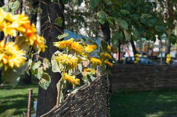 Плетень с цветами