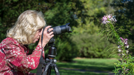Senior woman taking pictures of a spider flower in a garden on a sunny summer day