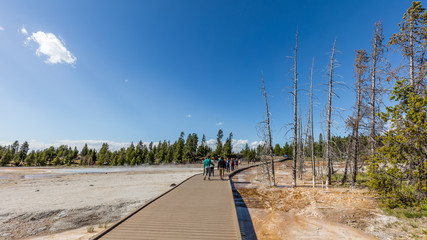 Wooden walkway among the geysers and mud pots. Dry trees after a fire on a background of blue sky. Fountain Paint Pots. Yellowstone National Park, Wyoming