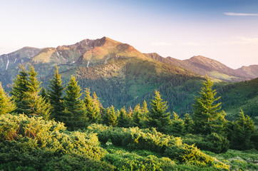 Summer landscape in the mountains with sunrise