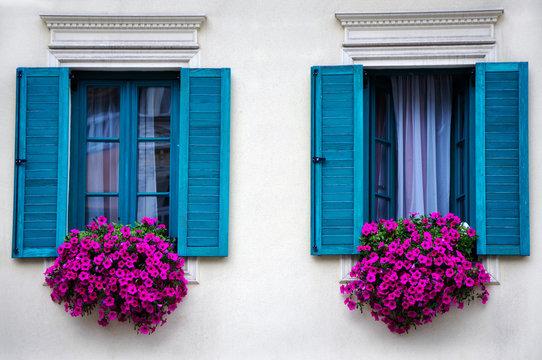 Blue windows with beautiful purple petunias in the windows.