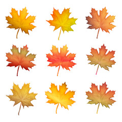 Vector set of autumn maple leaves