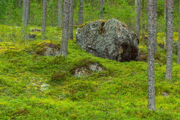Big stone in forest