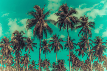 Coconut palm trees on beach and blue sky with cloud background.